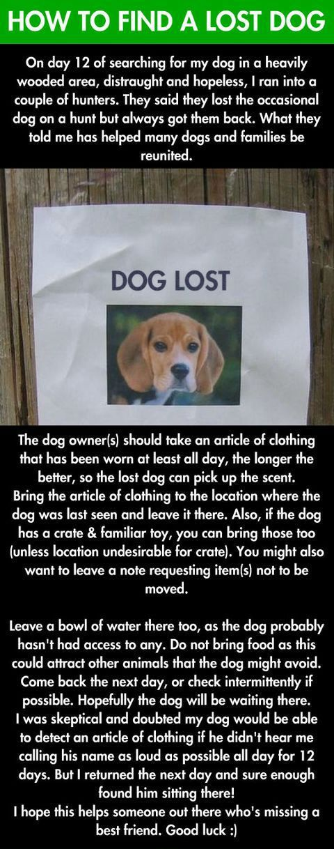 Find-Lost-Dog